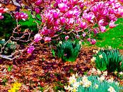 Eden Park - Khron Conservatory