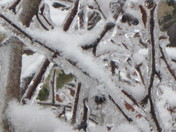 SNOW 09 042.JPG