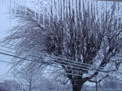Ice Everywhere - Gutters, Electric Lines & Bushes
