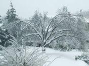 winter storm 009.jpg