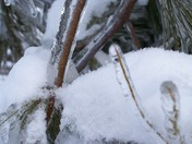 snow and ice 2009