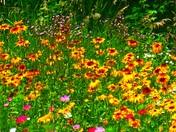 field of flowers