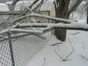 Downed tree 2