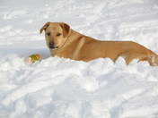 My dog Ceasar loves the snow!!!!