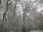 My backyard, Anderson Township