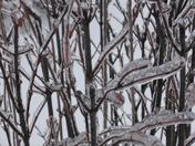 Ice twigs