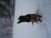 Halo loving the snow