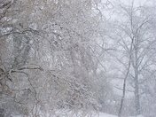 Big Snow and Ice Storm 2009.jpg