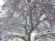 Beautiful Ice tree