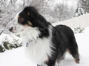 Freckles knee-deep in snow