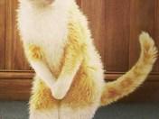 Cat has to pee.jpg