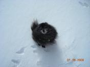 Big Snow 2009 007.jpg