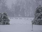 30 turkies gathering in the snow storm