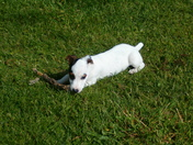 gizmo with stick