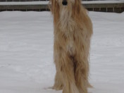 A Dog's Snowday!!