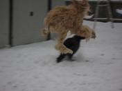 Gabriel...Dog's Winter Olympics!