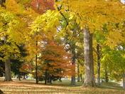 Autumn Splendor In Wilmington, Ohio