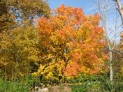 Orange Burst of Fall