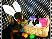 Gidget & Johnny Are Ready For Easter