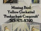 Missing Family Member
