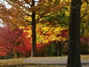 Fall Florence KY