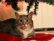 the tree cat