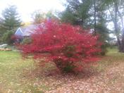 Fall's Beauty!