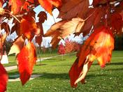 fall in Oxford