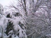 snow trees2-6-10.jpg