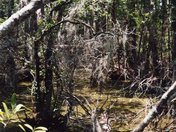 Orlando Everglade