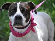 Raylene is still waiting for a loving home