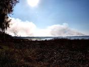 Fire at Lake Lochloosa