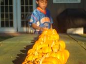 and more pumpkins