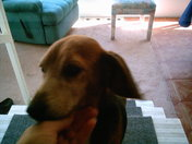 new dog 002 - Copy.JPG