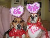 Cupid Beagles