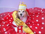 Lauren is crowned Prom Queen
