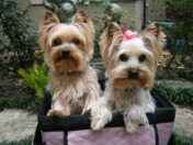 Olivia and Lulu in the garden