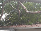 Fwd: Falling tree on house