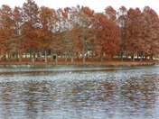 Fall Colors at waters edge