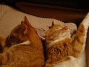 Bedtime Buddies.JPG
