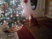 Doodles admires the tree.jpg