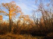 Winter in Seminole Preserve