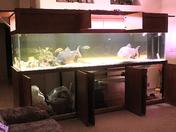 All Open 560 gallon fish tank5-5-12