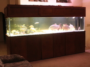 all closed 560 gallon fish tank 5-5-12