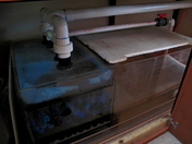 60 gallon sump filter 5-5-12