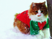 Cats Love Snow Too!