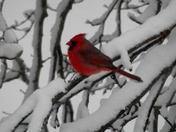winter storm,,,12/15/2013