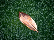 Leaf sits on an icy surface