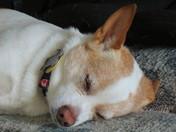 Sammy sleeping
