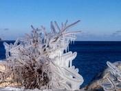 ice on tree